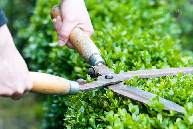 Dịch vụ chăm sóc cây xanh vuoncayhoabinh.vn