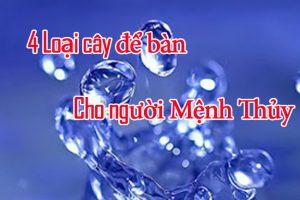 Cây Để Bàn Cho Người Mệnh Thủy vuoncayhoabinh.vn